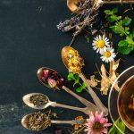 les-plantes-sauvages-comestibles