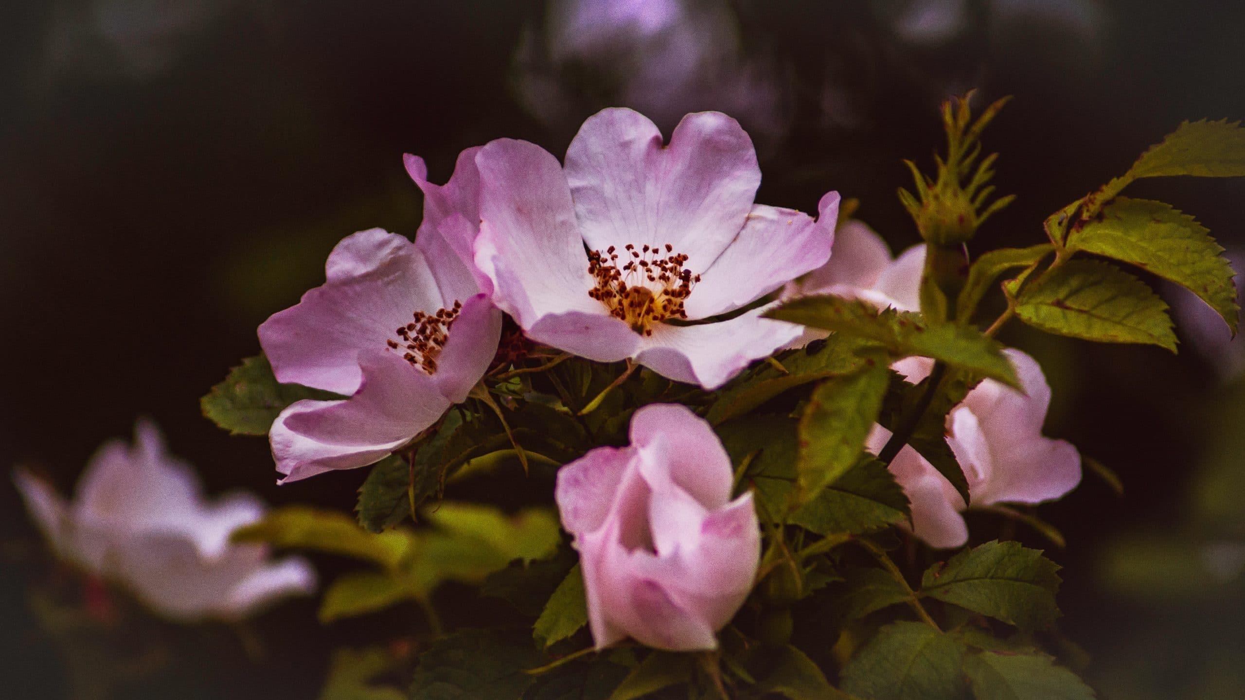 Les fleurs de Bach, qu'est-ce que c'est ?